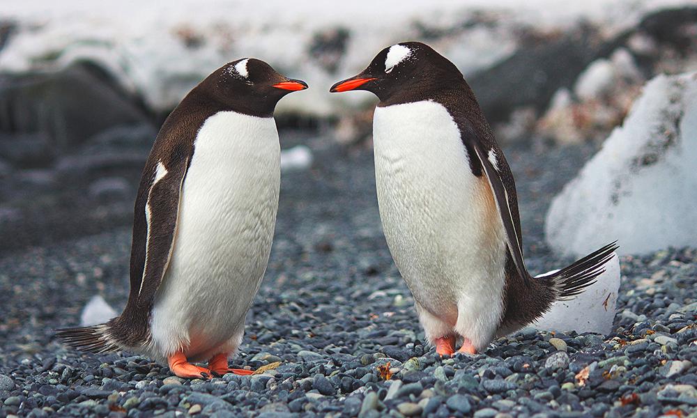 Dress up like a penguin and parade around